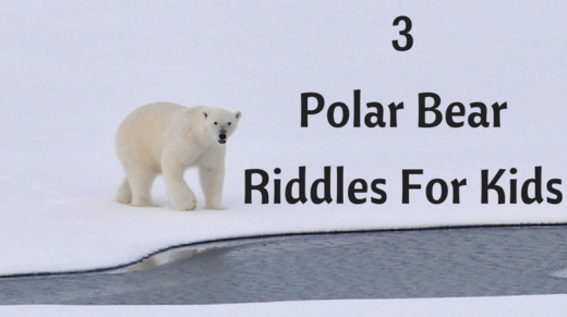 3 Polar Bear Riddles For Kids