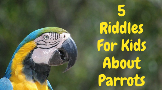 5 Parrot Riddles For Kids