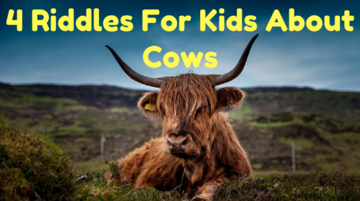 4 Cow Riddles For Kids
