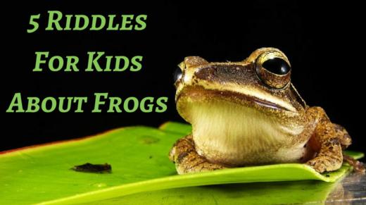 5 Frog Riddles For Kids