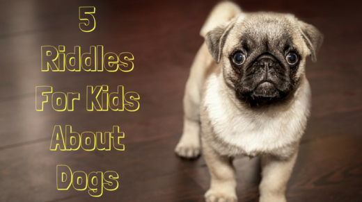 5 Dog Riddles For Kids