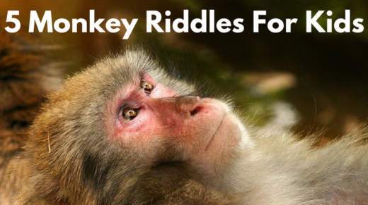 5 Monkey Riddles For Kids