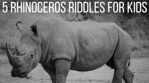 5 Rhinoceros Riddles For Kids