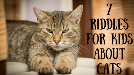 7 Cat Riddles For Kids