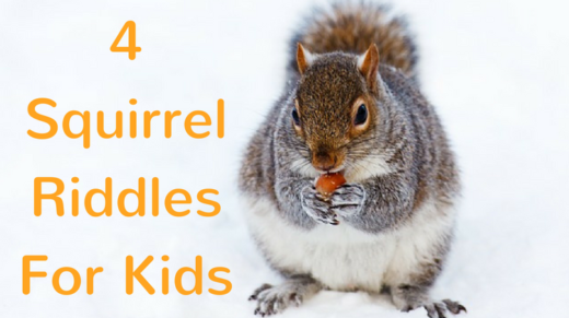 4 Squirrel Riddles For Kids