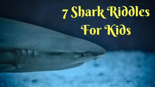7 Shark Riddles For Kids