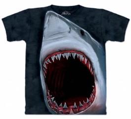 Shark Riddles