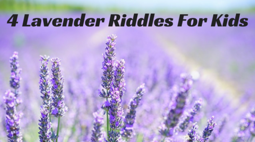 Lavender Riddles For Kids