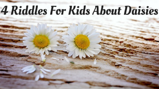 Daisy Riddles For Kids