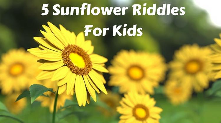 Sunflower Riddles