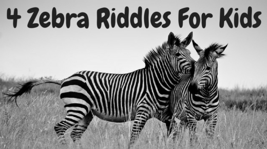 Zebra Riddles For Kids
