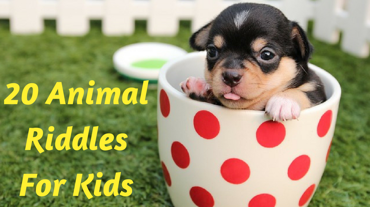 20 Animal Riddles For Kids